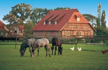 Horses grazing near a traditional farmhouse